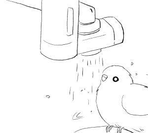 水浴びインコさん