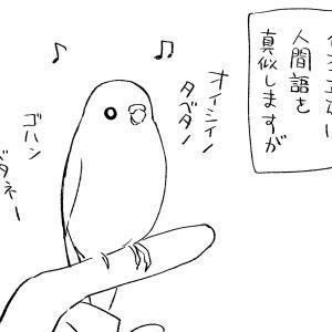 鳥語と人間語