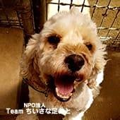 2019年9月29日(日)【倉敷】里親予約会開催のお知らせ