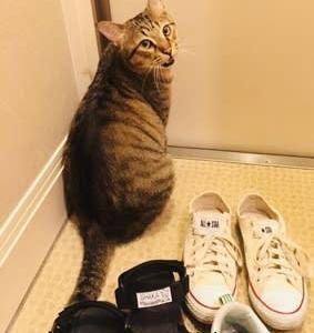 再掲 猫を探しています