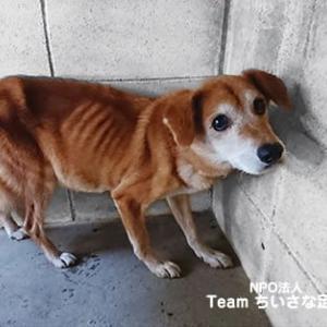 ガリガリに痩せた犬保護しました!
