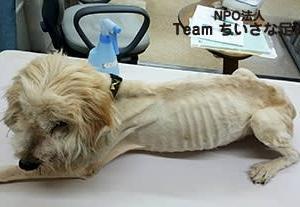 衰弱しきった犬救出!!  病院へ