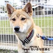 2020年4月5日(日)【倉敷】里親予約会開催のお知らせ