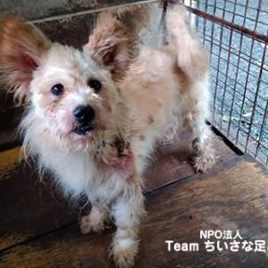 この子たちを助けたい!多頭飼育の犬たち 治療と新しくケガした子