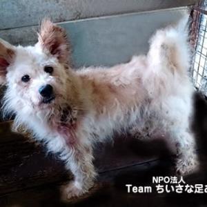 この子たちを助けたい!多頭飼育の犬たち ケガをしていた子の治療