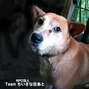 この子たちを助けたい!多頭飼育の犬たち 目に下に腫瘍ができていた子
