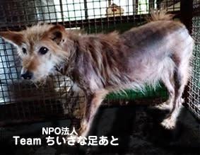 この子たちを助けたい!多頭飼育の犬たち ひどい皮膚病の子