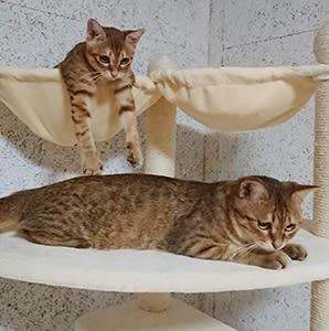 ♪幸せ便り 成猫2匹
