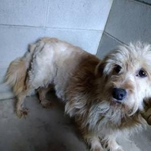 この子たちを助けたい!多頭飼育の犬たち 新たに治療が必要な子が。