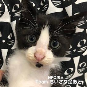 [里親さま募集]子猫 白黒3兄弟