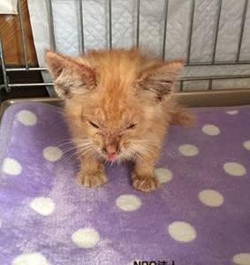 [里親さま募集]子猫 メンバー宅の玄関前に置かれた子猫!