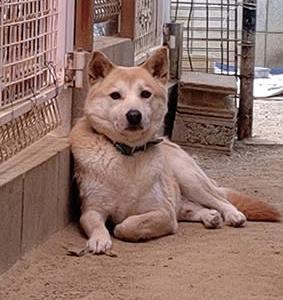 野犬くん…その後の様子