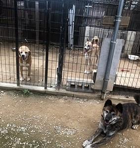 シェルターの保護犬達のようす