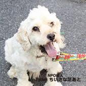 2019年9月8日(日)【倉敷】里親予約会開催のお知らせ