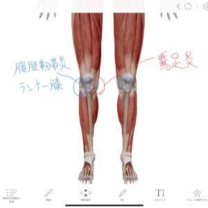 ランニングでの膝痛 内側と外側の痛み 鵞足炎、腸脛靭帯炎、