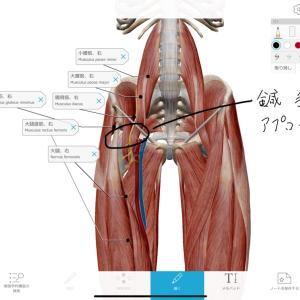 股関節痛 ダンサーで臼蓋形成不全で屈曲時痛の患者さんにエコー鍼で改善