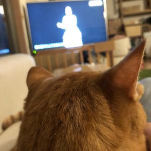 猫の後頭部と、AI技術と。