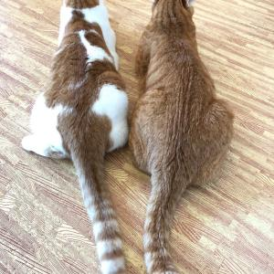 兄弟猫の背中