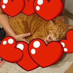お風呂上がりに猫が甘えてきたら