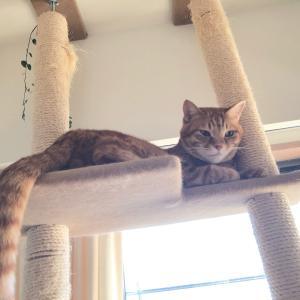 朝のお仕事と、見つめる猫