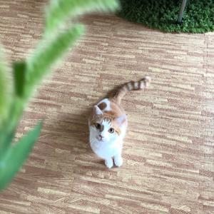 猫をスローで撮ってみる