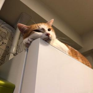 冷蔵庫でチッ (っていう雰囲気)