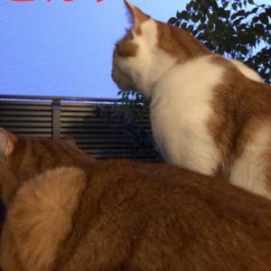 カミナリと猫