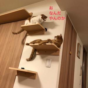 猫の世界が広がるキャットウォーク