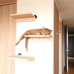 2段目の猫