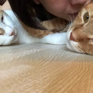 人生は選択の連続 猫あるある編