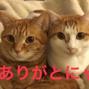 ラファチョコからのお礼(読者登録数3500突破!)