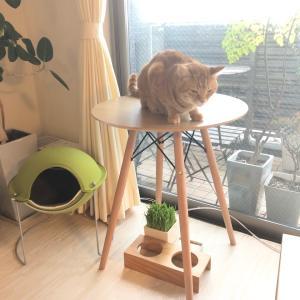 猫のためのカフェテーブル