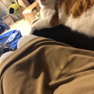 オットの膝と、子どもと猫
