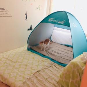 テントを買ってみた