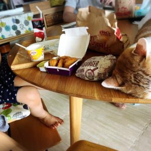 食卓のチョコちゃん、こんな感じ