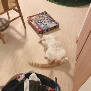 落ちてる猫、続き