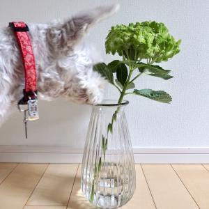 花瓶を買った