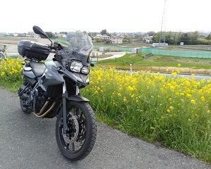 バイクでお出かけ【ネーブルパーク】お蕎麦と名残の桜と菜の花ツー