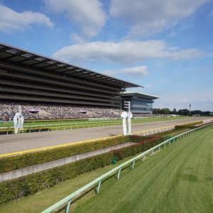 東京競馬場、イントレ(馬場内撮影台)からの撮影、第8レース精進湖特別