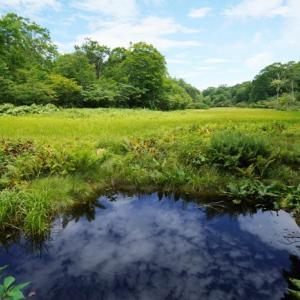 変化に富んだ天生県立自然公園ー湿原、ブナ、カツラの巨木