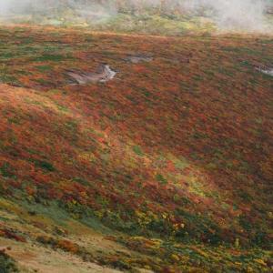 神の絨毯、栗駒山の紅葉・天狗平、下山編