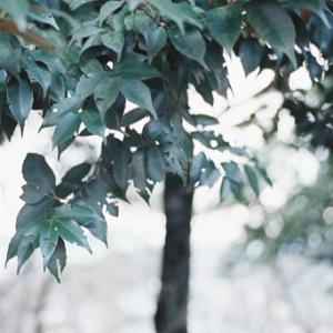呼吸スル樹*