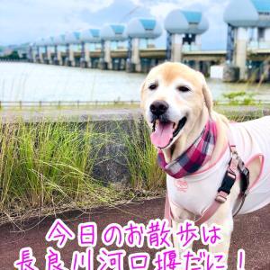 長良川河口堰の上をお散歩だに!