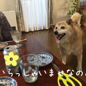 カン子ママ復活♪
