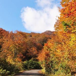 野々海周辺の10月28日の紅葉