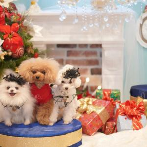 クリスマスセット♡
