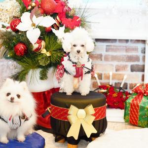 クリスマスセット♡ ①
