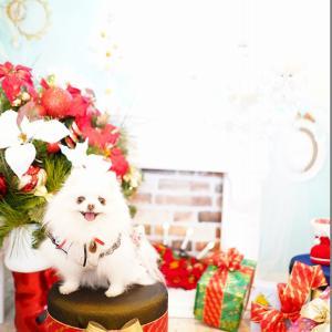 クリスマスセット♡ ②