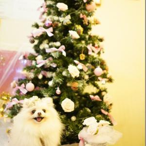 二件目カフェのクリスマスセット♡ ②