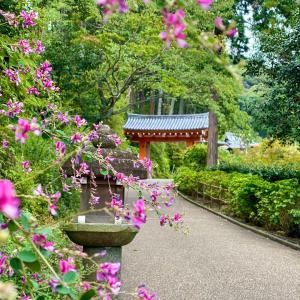 京都 醍醐寺 かき氷